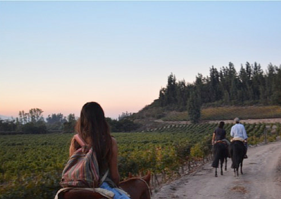 Wine region insider: CHILE