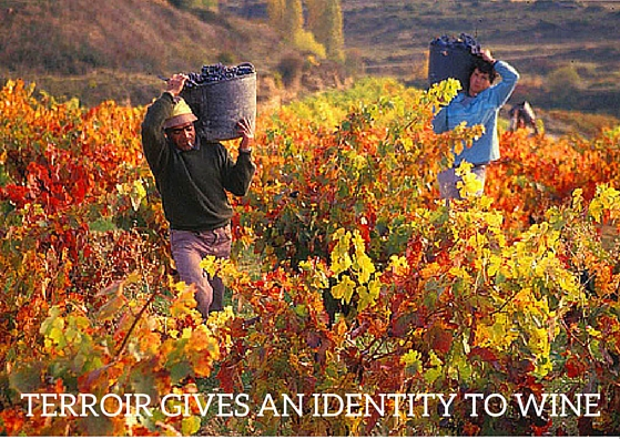 Terroir creates an identity for wine. Why does terroir make wine so special?