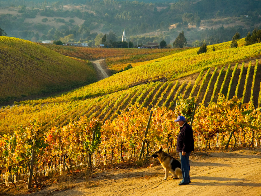 Did you know there is some Riesling in Chile?