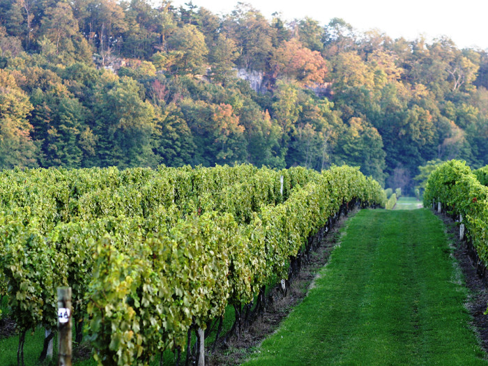 ontario vineyards
