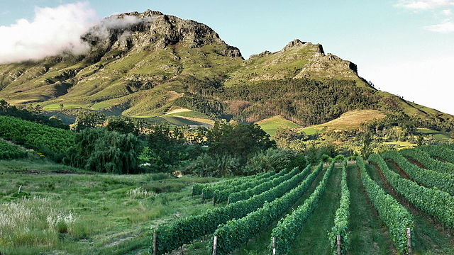 Stellenbosch, a little wine gem to explore at less than 1-hour drive from Cape Town.